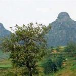 Loan Dau